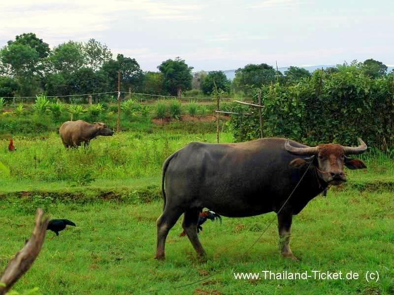 NORDOST-THAILAND REISE...