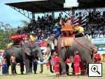 Surin Elephant Round Up